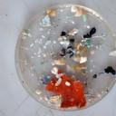 Les ordures marines, un centre d'intérêt scientifique