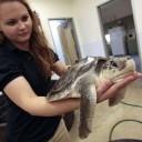 Les tortues touchées elles aussi