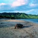 Parc National de Komodo - Indonésie