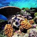 Parc Marin de la Grande Barrière de Corail - Australie