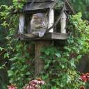 Arbre a chat jardin