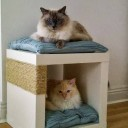 Arbre a chat meuble
