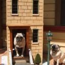 niche pour chien 30 mod les originaux et insolites pour votre toutou diaporama animaux. Black Bedroom Furniture Sets. Home Design Ideas