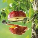 Hubert TAILLARD - J'ai descendu dans mon jardin... La pomme de Guillaume2
