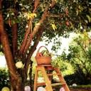 Eve HILAIRE - L'arbre potager2
