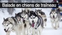 balade chiens traineaux2