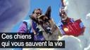 avalanche chien2