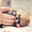 Mini chien –  Chien miniature bébé
