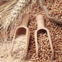 El salvado de trigo
