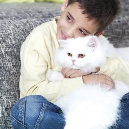 maladies transmises par les chats zoonoses du chat doctissimo diaporama animaux doctissimo. Black Bedroom Furniture Sets. Home Design Ideas