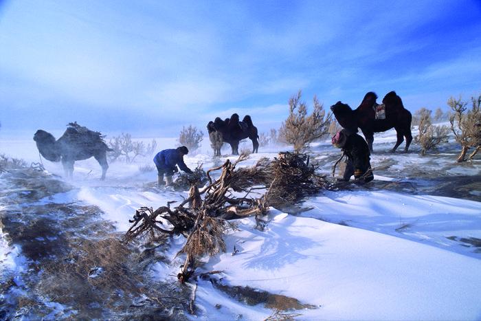 Collecte du bois, Mongolie  Diaporama Famille  Doctissimo ~ Famille Du Bois