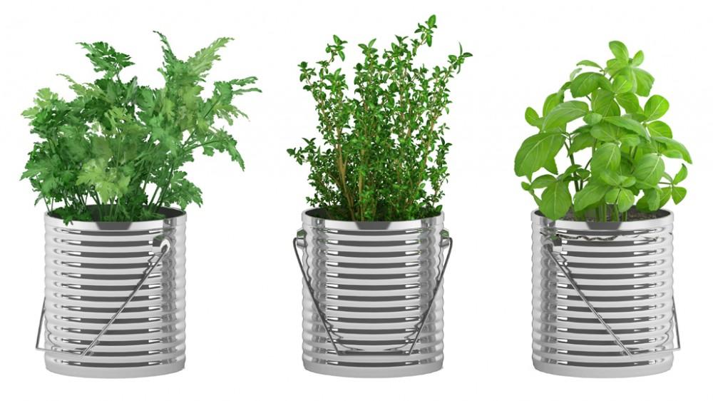 plantes aromatiques comment et quand planter des aromates une vid o environnement doctissimo. Black Bedroom Furniture Sets. Home Design Ideas