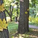 Lettres d'amour dans un arbre allemand