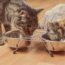 1-manger-chat
