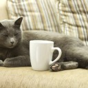 3-cafe-chat