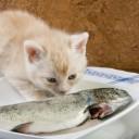 7-poisson-chat