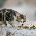 12-avarie-chat