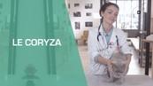 CORYZA-CHAT