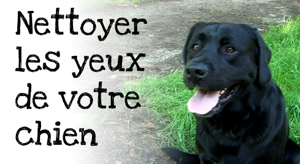 Nettoyer yeux chien comment nettoyer les yeux d un chien - Comment couper les griffes d un chien ...