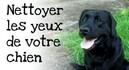 Comment-nettoyer-les-yeux-de-votre-chien.jpg
