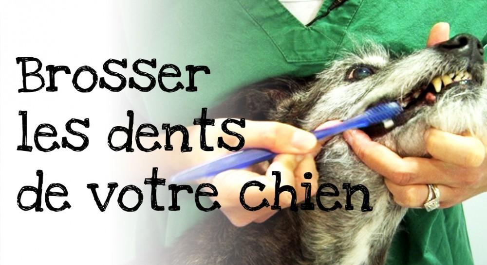 Brosser les dents chien comment brosser les dents de son - Comment couper les griffes de son chien ...