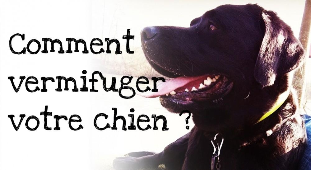 vermifuger son chien comment vermifuger un chiot ou un chien une vid o famille doctissimo. Black Bedroom Furniture Sets. Home Design Ideas