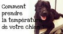 Comment-prendre-la-temperature-de-votre-chien.jpg