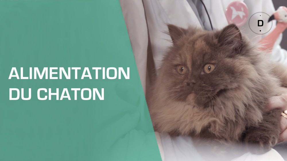 comment nourrir un chaton les conseils de notre v t rinaire une vid o famille doctissimo. Black Bedroom Furniture Sets. Home Design Ideas
