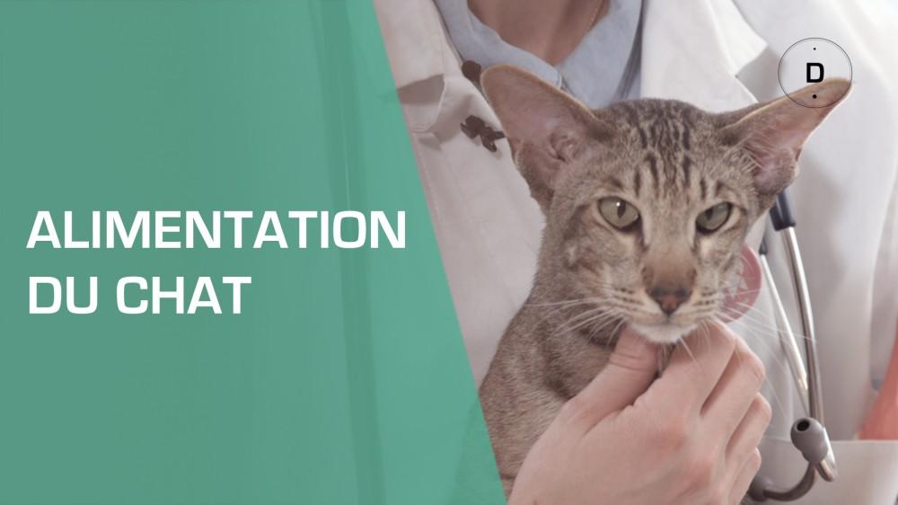 Alimentation du chat comment bien nourrir un chat adulte - Comment couper les griffes de son chat ...