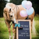 Annonce grossesse cheval