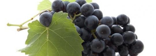 Recette raisin