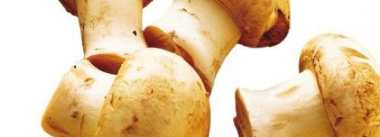 Recette champignon de paris