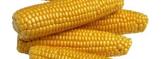 Recette maïs