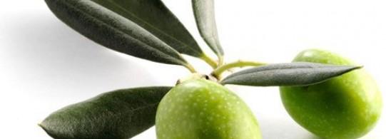Recette olive verte