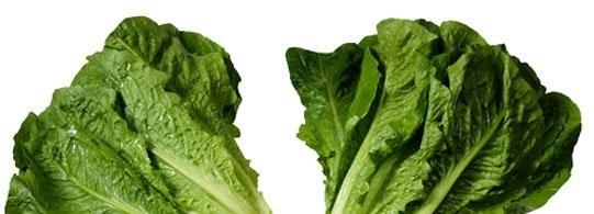 Recettes à base de Salade
