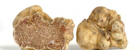 Recette truffe blanche