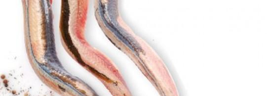 Recette anguille