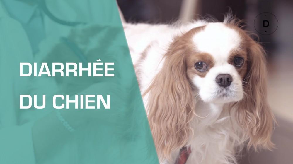 mon chien a la diarrh e que faire pour le soigner une vid o famille doctissimo. Black Bedroom Furniture Sets. Home Design Ideas