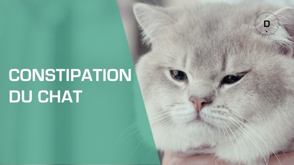 Mon chat est constip comment le soigner une vid o - A quel age couper les griffes d un chat ...
