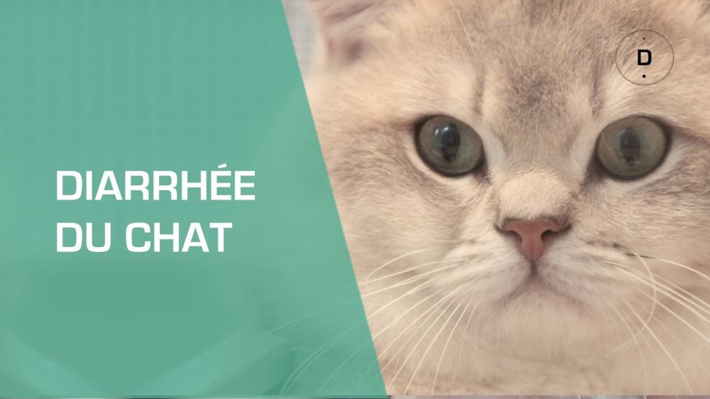 Mon chat a la diarrh e que faire pour le soigner une - Comment couper les griffes de son chat ...