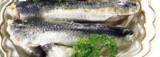 Recettes à base de Sardine