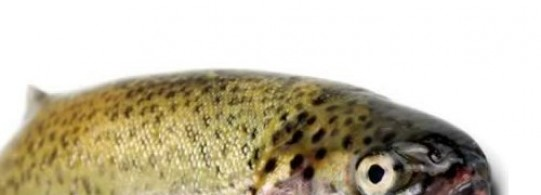 Recette truite saumonée