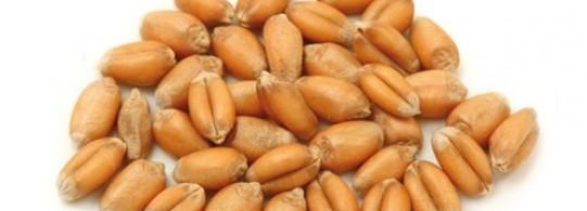 Recette blé