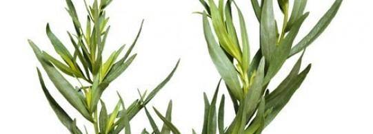 Recettes à base de Fines herbes