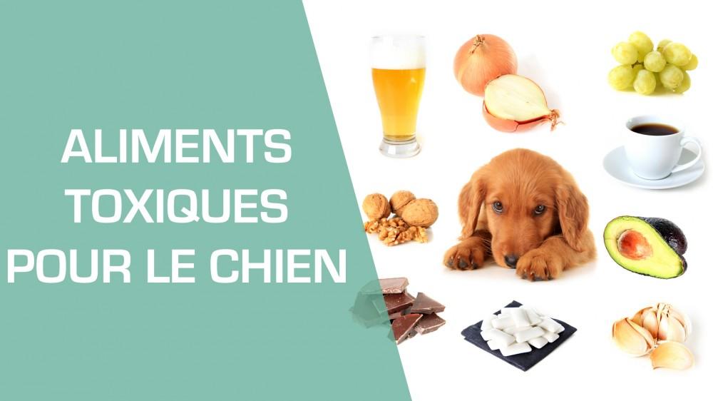 les aliments toxiques pour le chien tous les aliments dangereux une vid o famille doctissimo. Black Bedroom Furniture Sets. Home Design Ideas