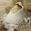 Céleri en croûte de sel et sojasun cuisiné à la moutarde d'orléans