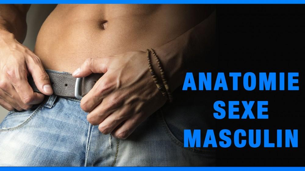 Sexe Masculin Banque D'Images, Vecteurs Et Illustrations