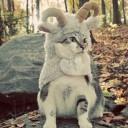 Déguisement chat bélier
