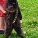 Déguisement chat Chewbacca
