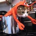 Déguisement chat homard